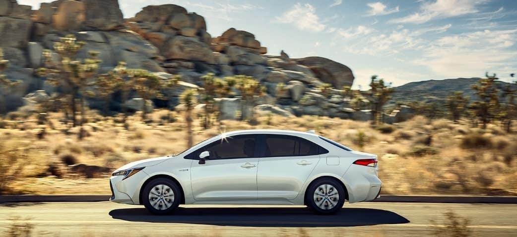 2020 Toyota Corolla en el Desierto