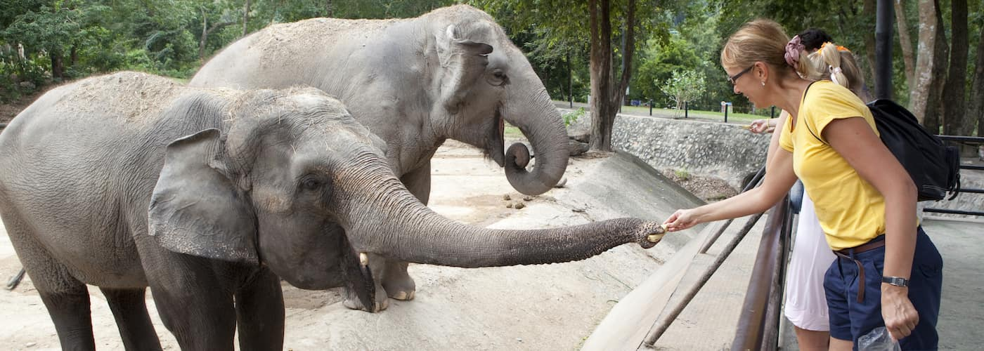 woman at zoo feeding elephants
