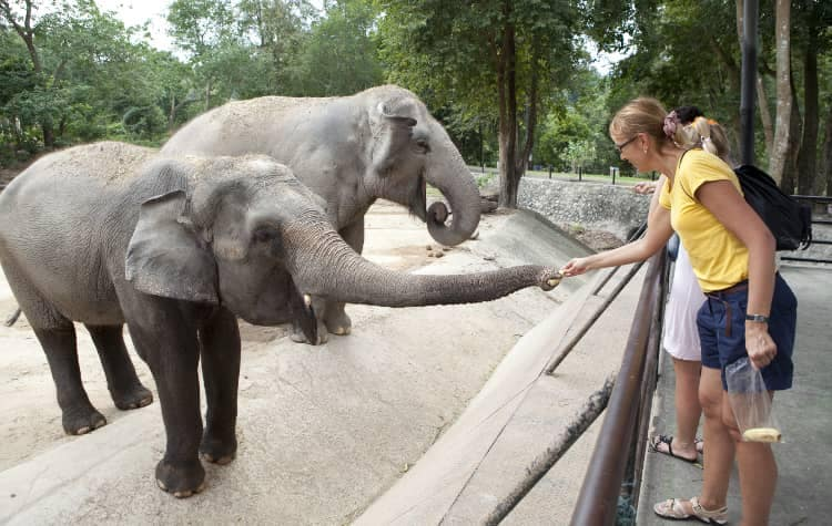 people touch elephants at Zoo
