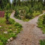 Trail Paths in Park in Renton, WA