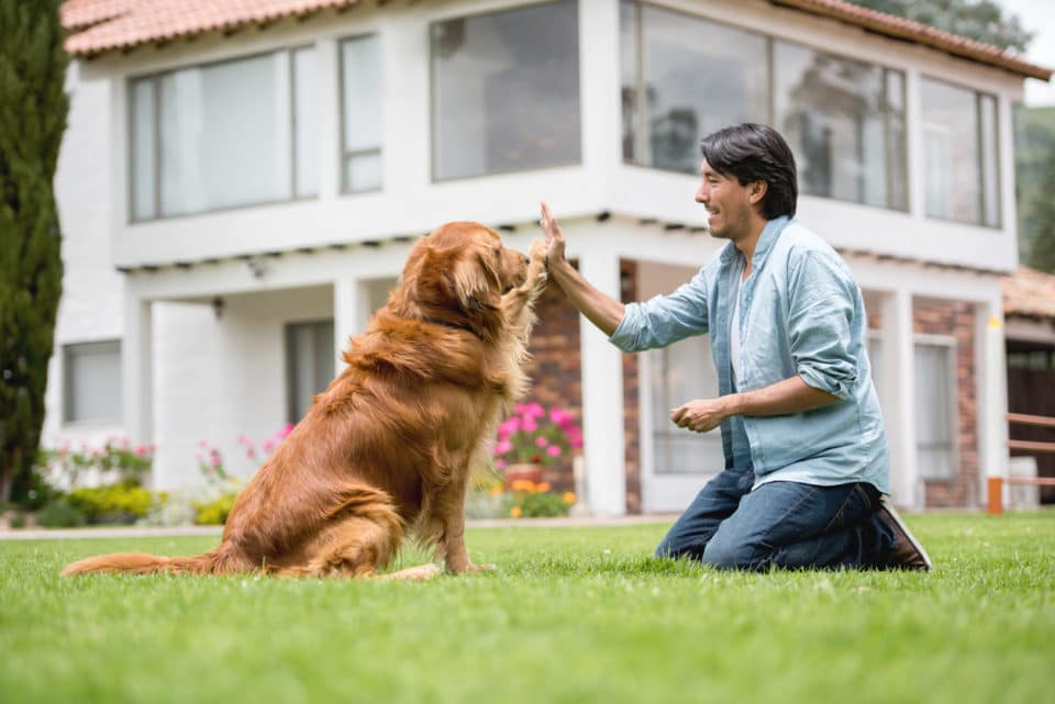 Man training his dog to give him a high-five