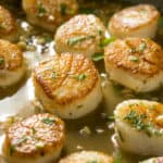 pan full of seared scallops