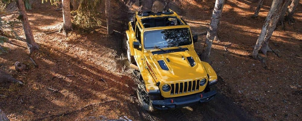 2019 Yellow Jeep Wrangler in Woods